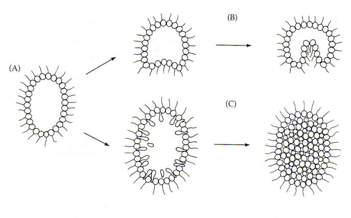 fig-31